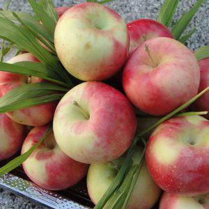 نهال سيب گلاب | خصوصیات سیب گلاب