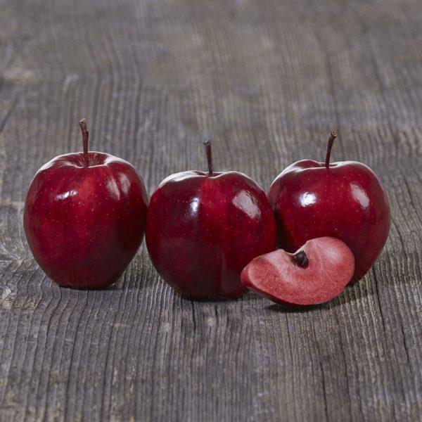 نهال سيب خونی   سیب تو سرخ